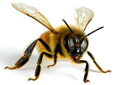 Having Googled Bee Nipples, I Could Have Put Something Far More Explicit Here