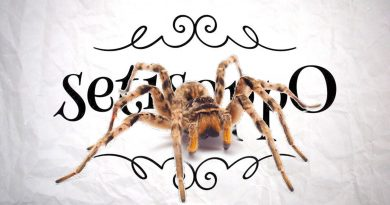 What's The Opposite Of A Spider?